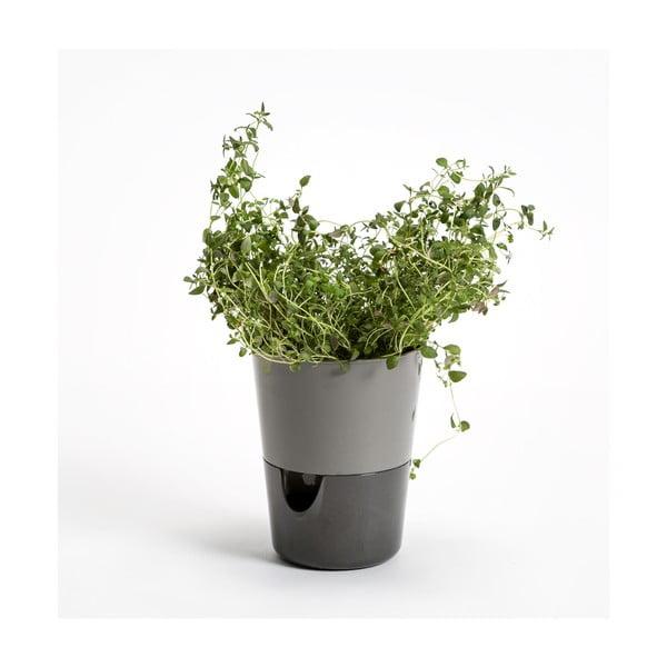 Šedý samozavlažovací květináč Plastia Rosmarin