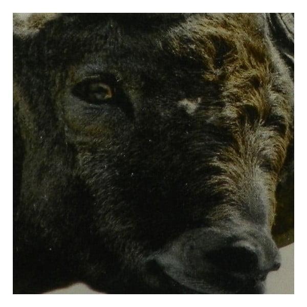 Polštář Capricorn 50x50 cm