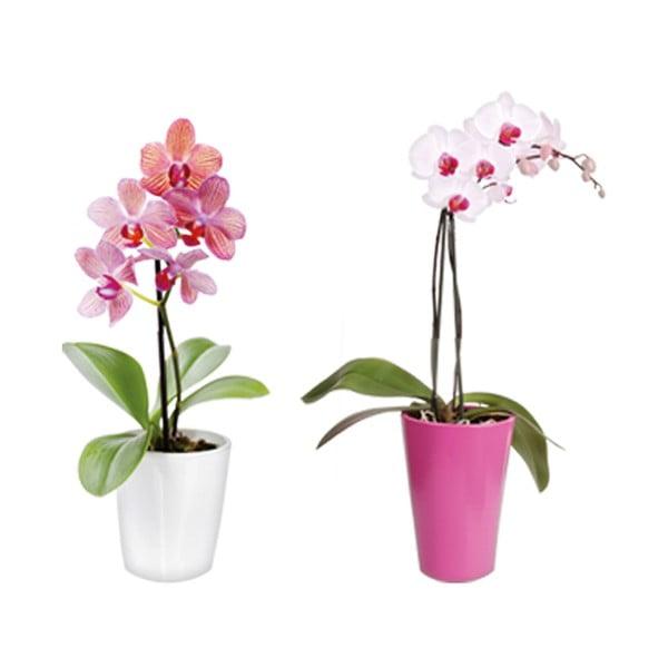 Samolepka na okno Orchideje