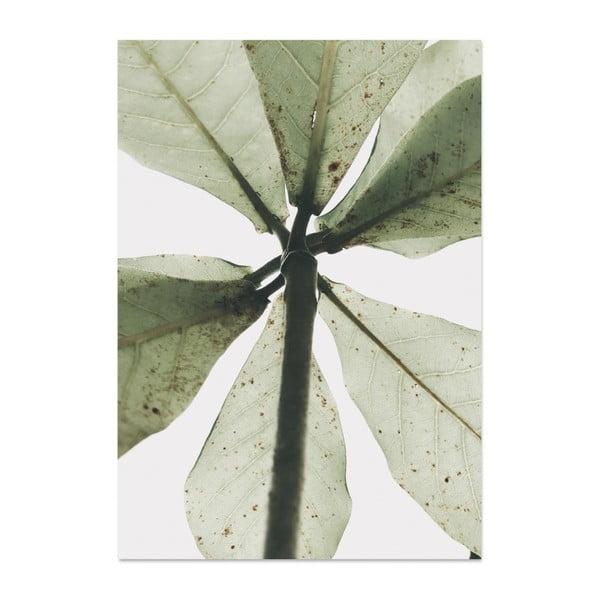 Plakát HF Living Botanic L.A., 21 x 30 cm