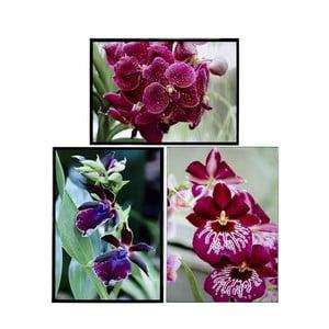 Sada 3 obrazů Orquideas