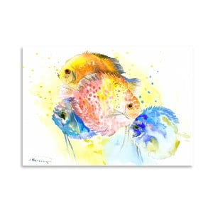 Plakát Discus Fish Rainbow
