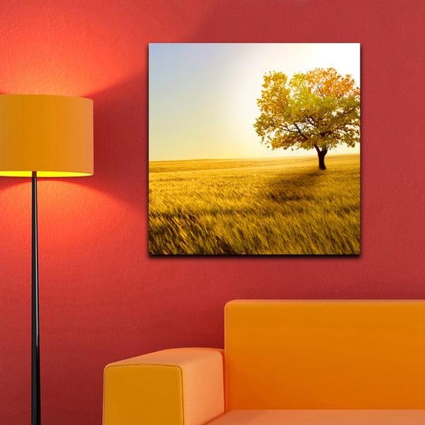 Obraz Na louce, 60x60 cm