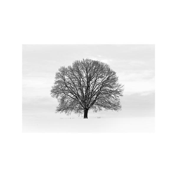 Velkoformátová tapeta Tree, 315x232 cm