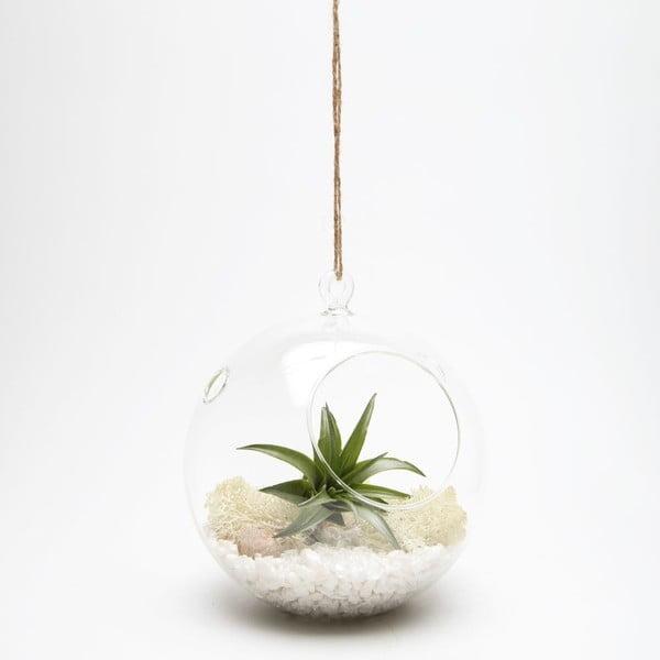 Závěsné terárium s rostlinami Urban Botanist Globe