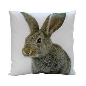 Polštář Rabbit Bob, 45x45 cm