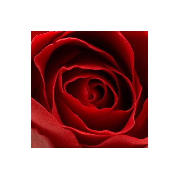Obraz na skle Růže IV, 20x20 cm