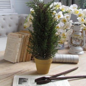 Dekorativní strom Orchidea Milano Cipresso