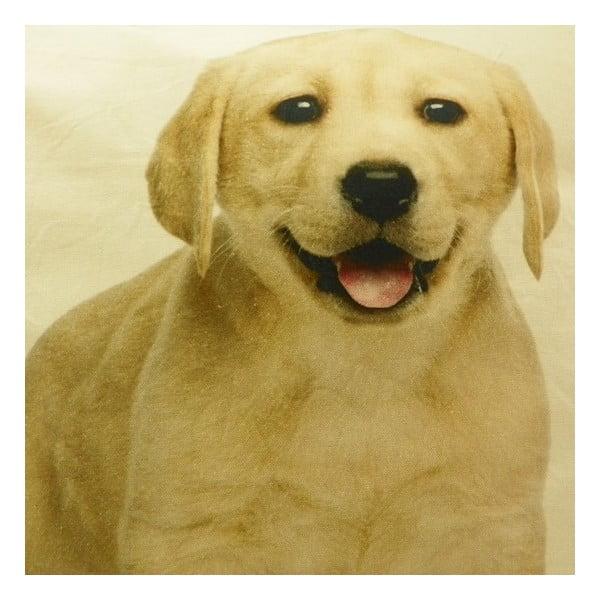 Polštář Labrador Blond 50x50 cm