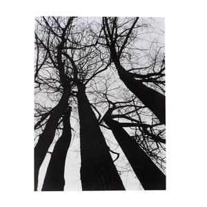 Tablou Tomasucci Winter Tree