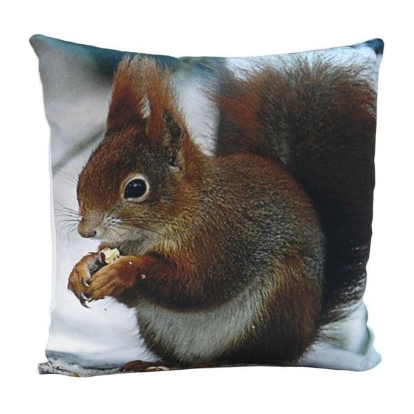 Polštář Squirrel Sam, 45x45 cm
