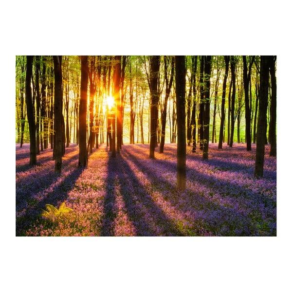Velkoformátová tapeta Les při západu slunce, 366x254 cm