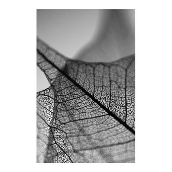 Obraz Black&White Microscope,45x70cm