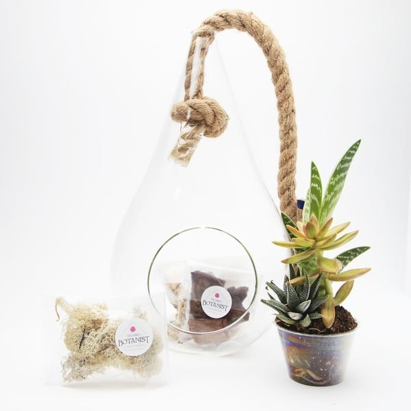 Závěsné terárium s rostlinami Urban Botanist Pacific Tear Drop DIY