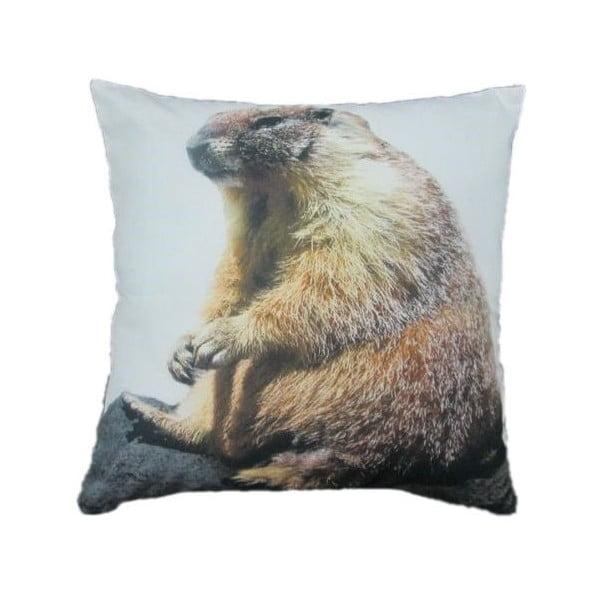 Polštář Marmot 50x50 cm