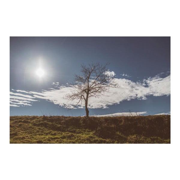 Fotografie Samotář, limitovaná edice fotografa Petra Hricka, formát A1
