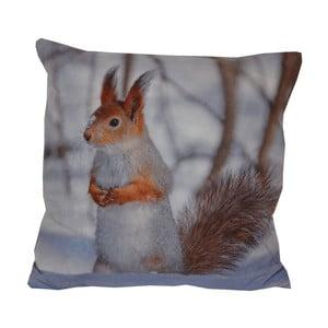 Polštář Animals Small Squirrel, 42x42 cm