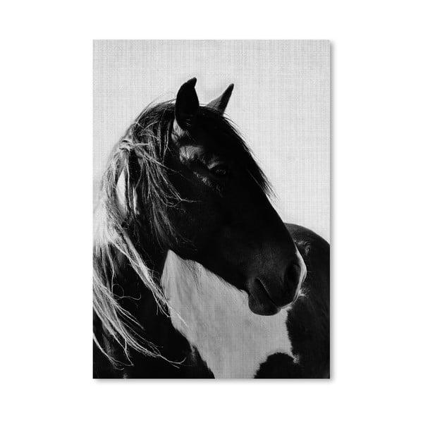 Plakát Horses