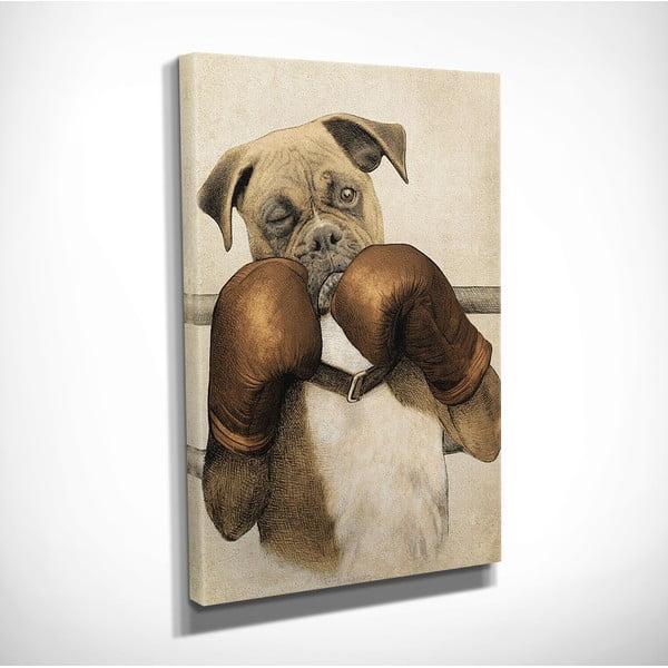 Boxer vászon fali kép, 30 x 40 cm