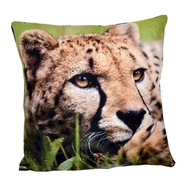Polštář Animals Leopard, 42x42 cm