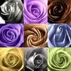 Obraz na skle Barevné růže, 50x50 cm