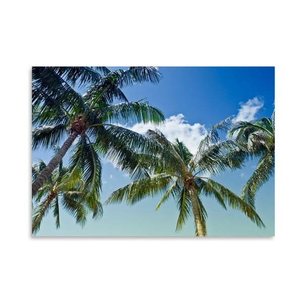 Plakát Palm Trees