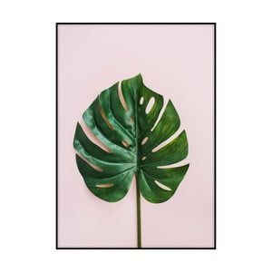 Plakát Imagioo Monstera Leaf, 40x30cm