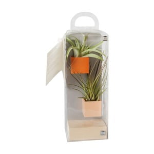 Sada 2ks malých magnetických květináčů s podstavcem a rostlinami, oranžová