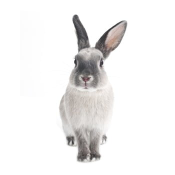 Autocolant pentru perete Dekornik Rabbit Harry 37 x 80 cm