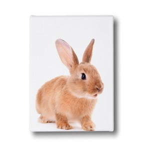 Obraz Mr. Little Fox Bunny Front