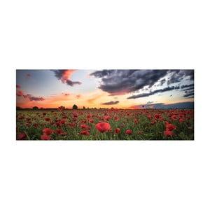 Skleněný obraz DecoMalta Poppies, 125x50cm