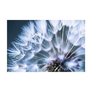 Obraz na plátně OrangeWallz Blue Dandelion, 60 x 90 cm