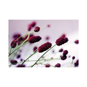 Fotoobraz Květiny, 90x60 cm