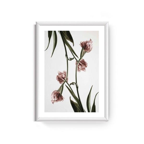 Obraz Piacenza Art Dendrobium, 30x20 cm