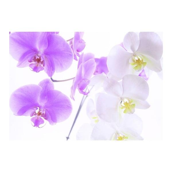 Tapeta Graceful Orchids, 400x280 cm