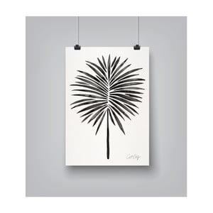 Poster Americanflat Fan Palm, 30 x 42 cm