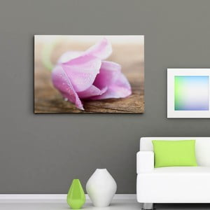 Obraz na plátně Květina s kapkami rosy, 50x70 cm