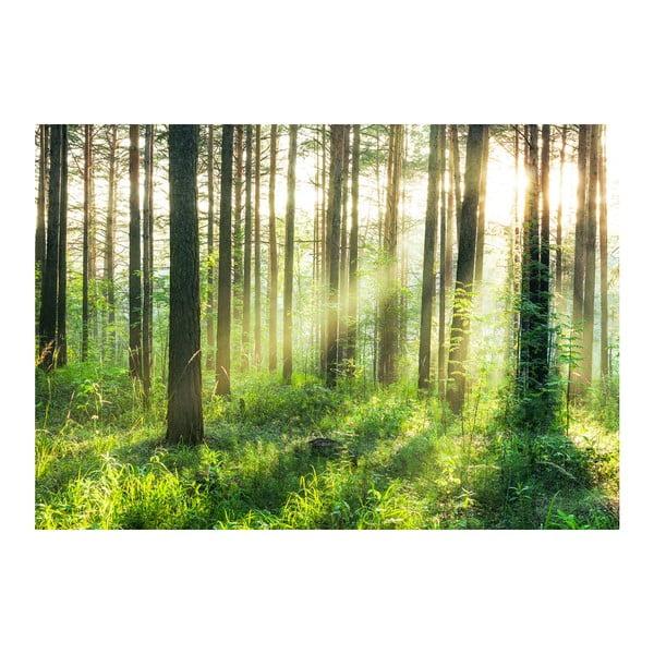 Velkoformátová tapeta Rozednění v lese, 366x254 cm