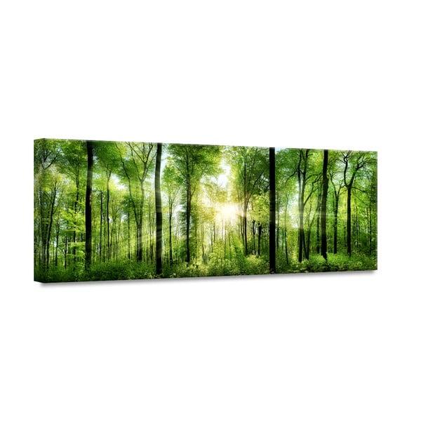 Obraz Styler Glasspik Nature Sunlight, 50x125 cm