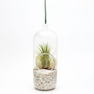 Závěsné terárium s rostlinami Urban Botanist Cylinder