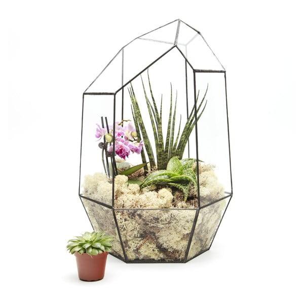 Terárium s rostlinami Urban Botanist Super Aztec Gem, tmavý rám