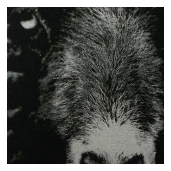 Polštář Sepia Black Sheep 50x50 cm