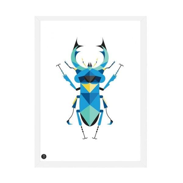Plakát Stag Beetle Color, 50x70 cm
