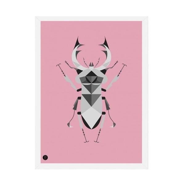 Plakát Stag Beetle Pink, 50x70 cm