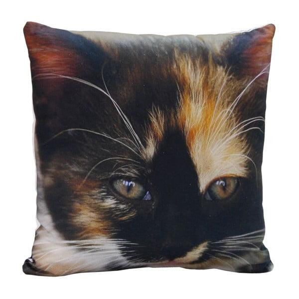 Polštář Black Cat, 45x45 cm