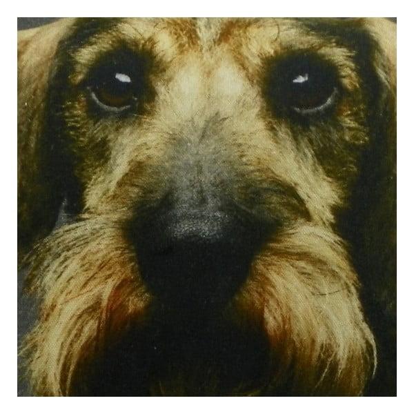 Polštář Shaggy Dachshund with Mustache 50x50 cm