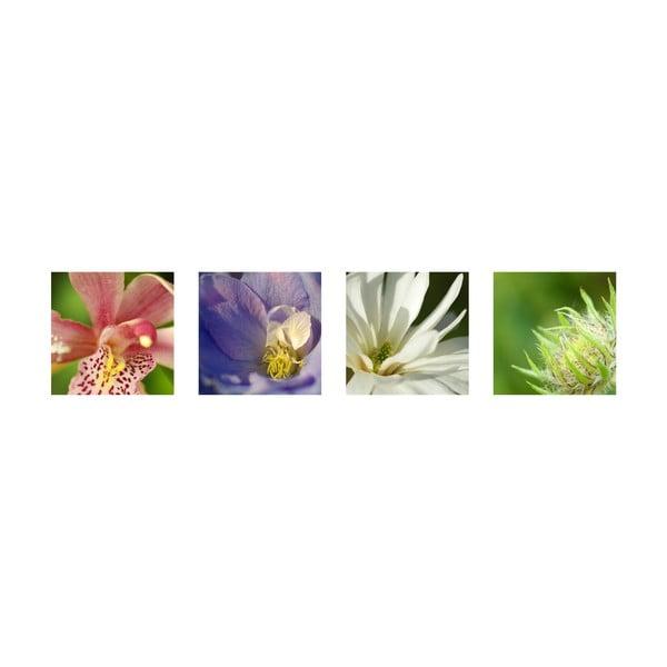 Set 4 fotoobrazů Květy, exkluzivní edice