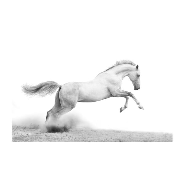 Obraz Divoký, 45x70 cm