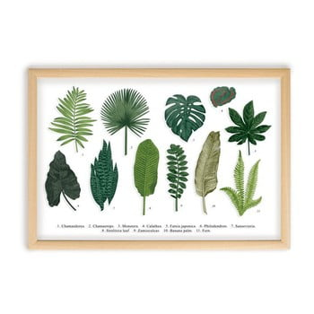 Tablou cu ramă din lemn de pin Surdic Leafes Guide, 50 x 70 cm poza
