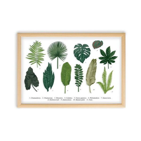 Obraz w ramie z drewna sosnowego Surdic Leafes Guide, 50x70 cm